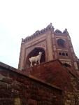 La porta più grande di Oriente, India